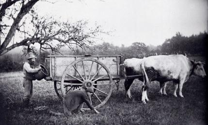 Picking apples 1880