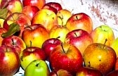 9291031-apples-are-stored-in-the-cellar-to-keep-fresh